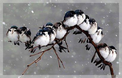 birdssleep
