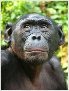 bonobohona