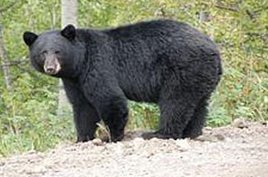 bearkillsboy
