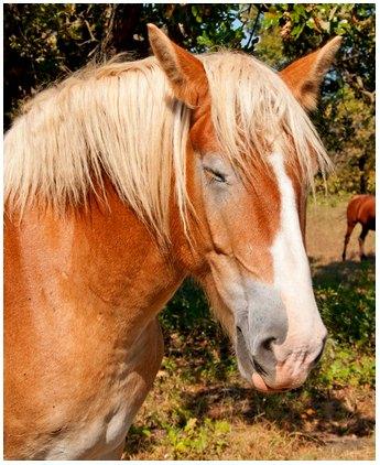 Horse-Asleep-Stan