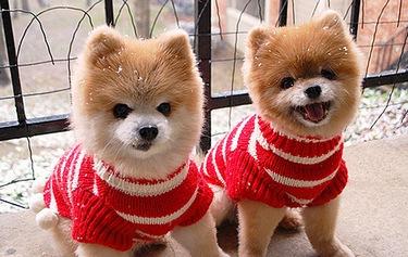 Christmas-Animalsdogs