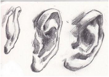 drawears