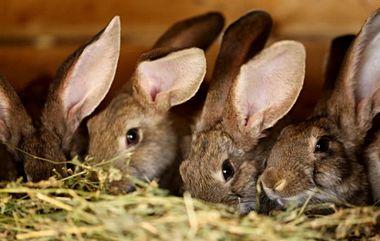 kaniner1