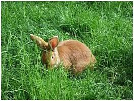 kaniner11