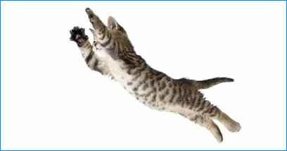 fallande-katt
