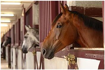 horseistall