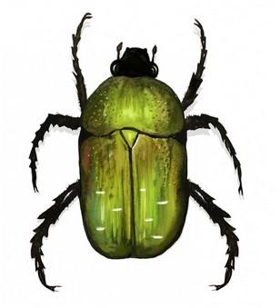 Gräsgrön guldbagge1