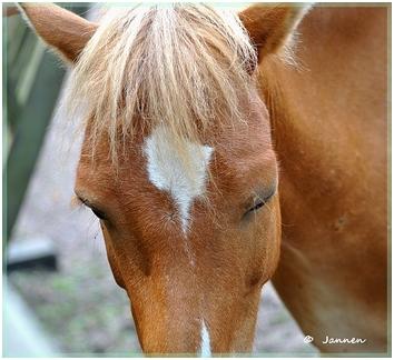 hästar222