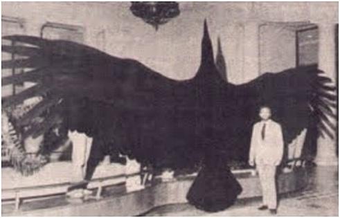 eag Haast's eagle