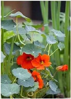 blommindk